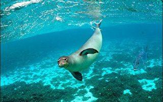 專家讚揚美國成立世界最大海洋生物保護區