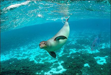 专家赞扬美国成立世界最大海洋生物保护区