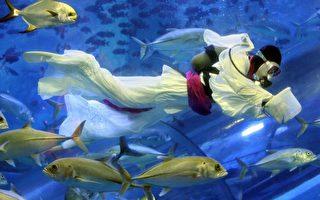 图片新闻:日本水族箱的七夕节