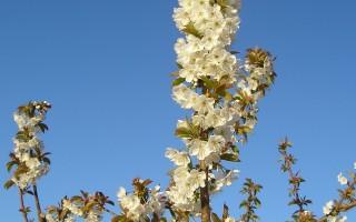 組圖:澳洲春天郊遊賞花
