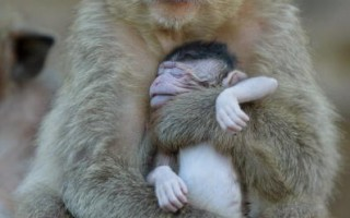 温馨组图:动物世界的母爱