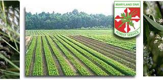 马州自然资源部提供线上订购树苗