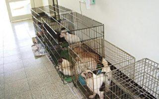 桃园大批名种犬遭弃养