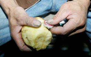 馬鈴薯發芽 切掉芽眼仍有毒