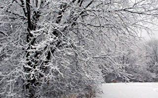 """【岁时礼俗】""""小雪""""雪满  来岁必丰年"""