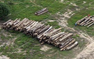 巴西划定全世界最大雨林保护区 比英格兰大