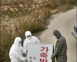 南韩全罗北道金堤市发生高病原性禽流感疫情