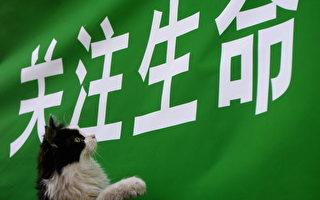 北大学生当众虐杀小猫 网友评论激烈