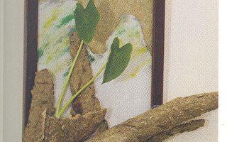 《简单玩花草》凉夏水生植物(一)