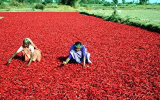 考古发现六千年前人类已享用红辣椒