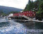 码头上等著登船赏鲸的游客(大纪元特约记者一游摄)