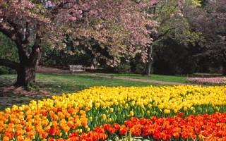 长木公园春季高峰周--十万郁金香绽开