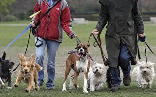 布里斯本發生大量寵物狗受攻擊事件