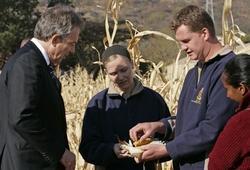 报告:生质燃料需求量大可能使穷国粮价高涨