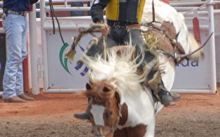 組圖:卡爾加里牛仔競技表演
