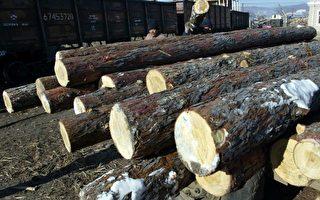 省時減噪 卑省採用創新木材技術