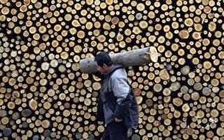 大陆木材价格涨不停 部分家具厂被迫关门