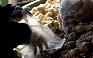 美警告: 一批中国生姜含有毒物质