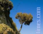 宁静的Capitola海滩﹐一群鹈鹕从天空飞过。 (摄影﹕Mark Zou/ 大纪元)