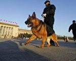 警犬和保安人員在天安門廣場上(Photo credit should read FREDERIC J. BROWN/AFP/Getty Images)