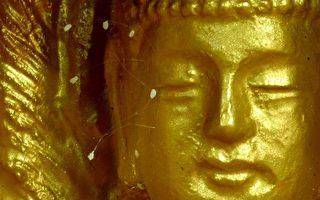 组图:三千年一开之奇花优昙婆罗世界各地绽放