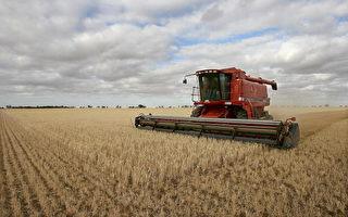 澳洲向世贸组织申诉 大麦出口商支持政府
