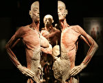 令人不忍睹的塑化屍體展。圖為一位被切成兩半的年輕男子,其身後另有一具男子屍體。(Getty Images)
