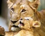 組圖:動物母子情深