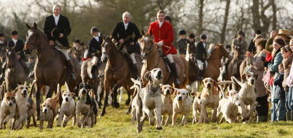 英国节礼日的传统:猎狐