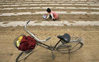 中國缺糧  向菲租耕地受阻