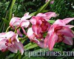 布魯克賽德花園將舉行蘭花節預告