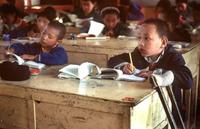 网评:西藏语文教育政策是摧毁性的绝育手术
