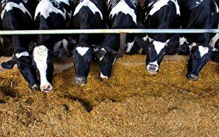 粮食供应  匮乏政治新挑战