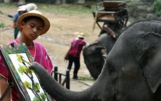 美動物園新商機 販賣動物畫作