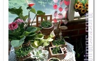阳台心视界:(图解)水果种子变漂亮盆栽