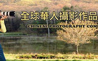 新唐人華人攝影大賽徵稿三個月