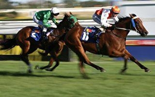 曾铮:澳洲的马与中国的人