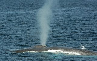 抢救鲸鱼大作战
