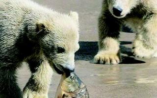 北极生活趣闻  禁止死亡