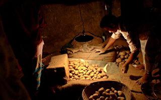 土豆变绿可否食用?最新研究给你答案