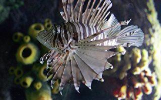 海底之下是否也繁殖着生命?