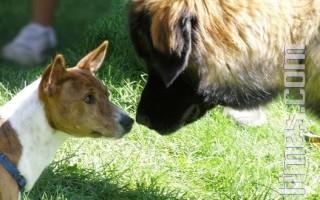组图﹕爱护动物慈善行 千狗齐参与