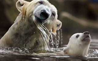 催生聯合國新規範  制止南北極生態浩劫