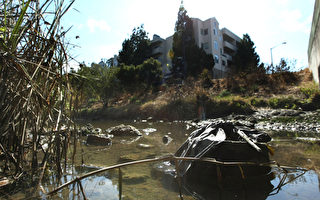 湾区溪流水质差 污染海湾