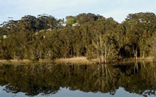 昆士兰男子丛林中靠吃蘑菇喝水幸存18天