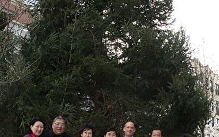 皇后區最高聖誕樹4日點燈