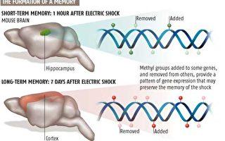 任百鳴﹕由科學最新發現「人類記憶存儲在DNA中而非大腦」所想到的