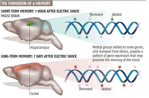 """任百鸣﹕由科学最新发现""""人类记忆存储在DNA中而非大脑""""所想到的"""