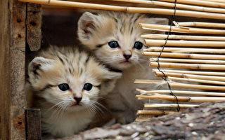 手續齊備 南京5000隻貓被賣到廣州做菜
