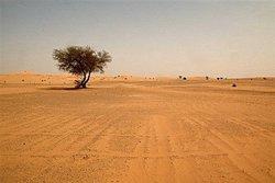 撒哈拉沙漠发现一亿年前翼龙骨